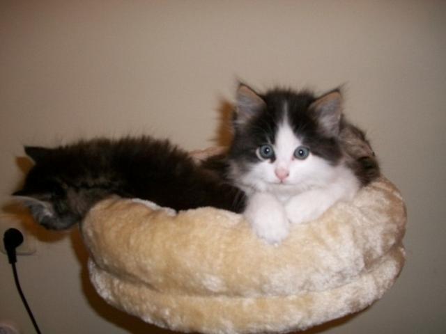 Отдам в дар: котятa фото3