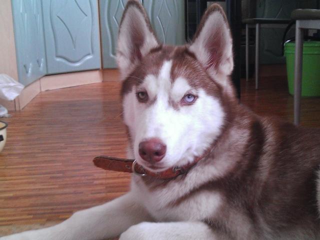 Потерялся/Нашелся: Пропала собака