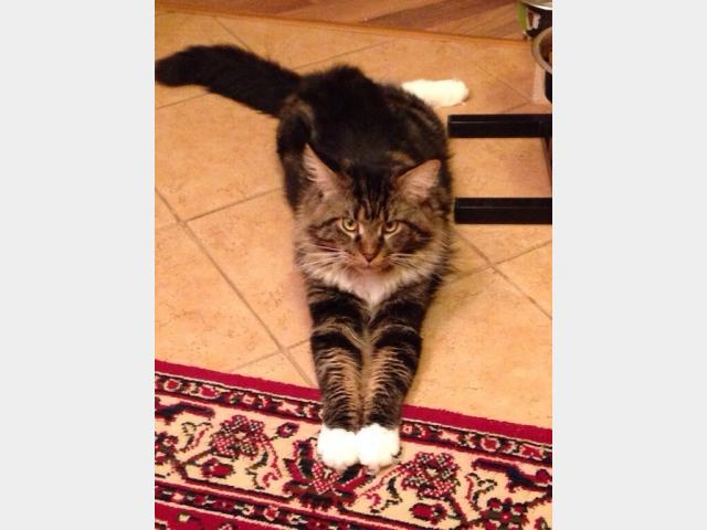 Вязка: Котик ищет кошечку