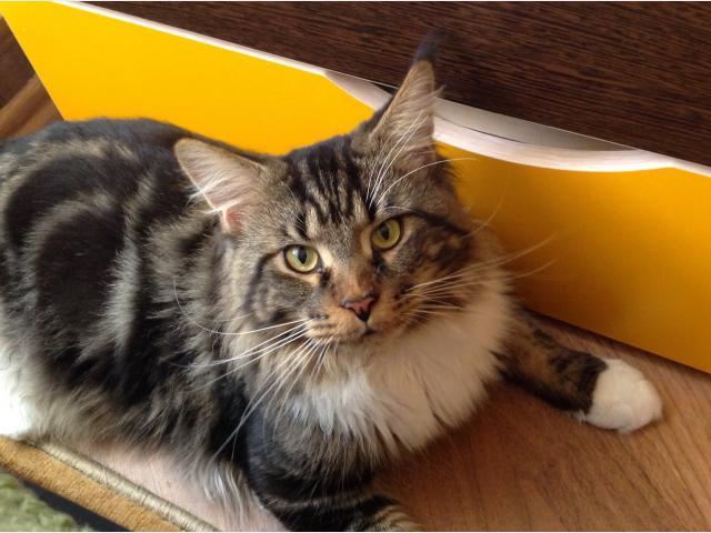 Вязка: Котик ищет кошечку фото2