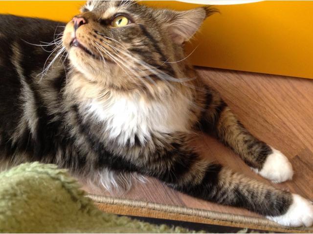 Вязка: Котик ищет кошечку фото3