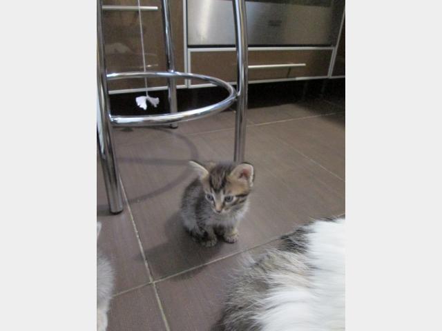 Отдам в дар: полосатый котенок фото2