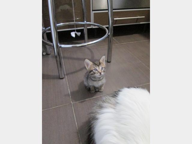Отдам в дар: полосатый котенок фото3