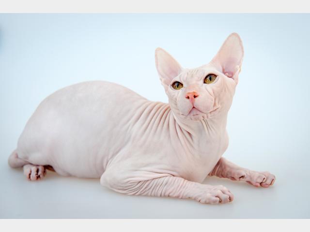 Продаю:  котят