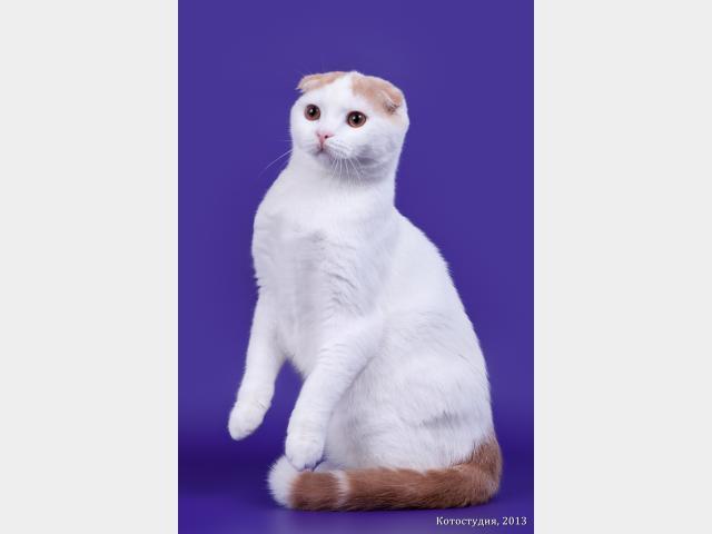 Продаю: Лучшие котята фото3