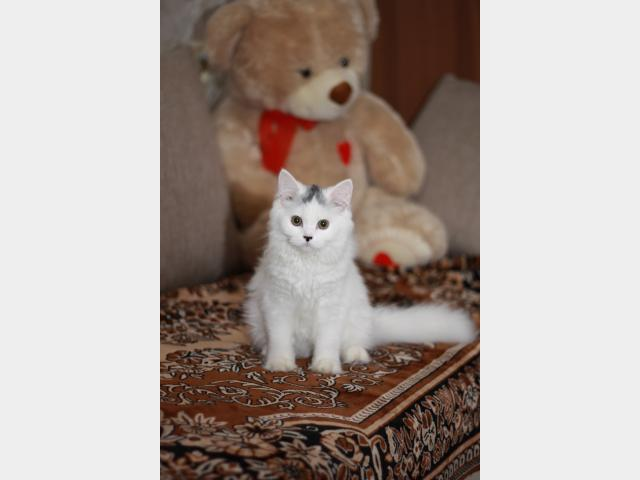 Вязка: ищем кота на вязку