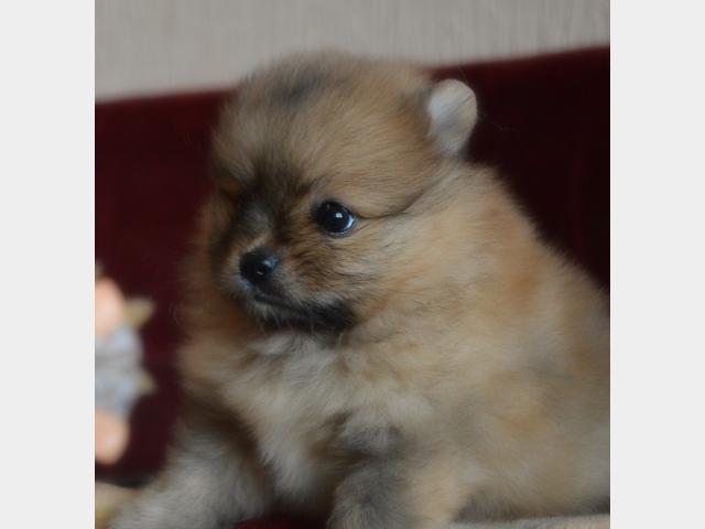 Продаю: чудный мишка мальчик фото2