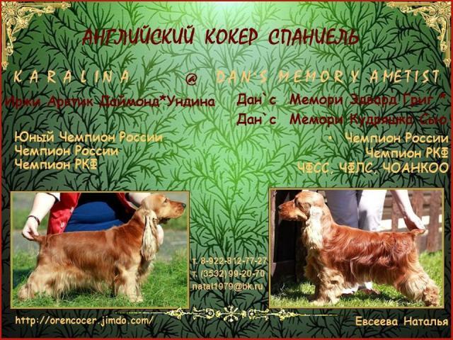 Продаю: Английский кокер спаниель щенки Оренбург