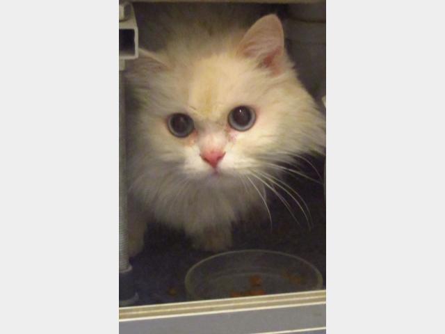 Потерялся/Нашелся: Найдена кошка