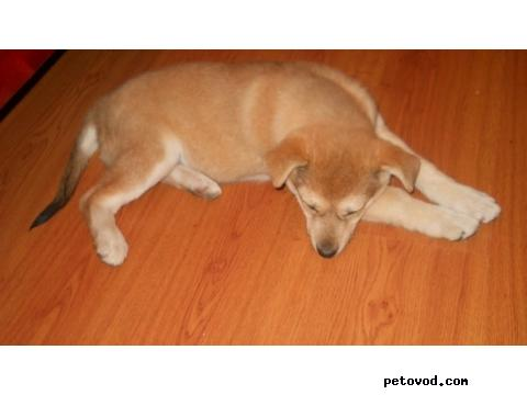 Отдам в дар: щенок в добрые руки фото3