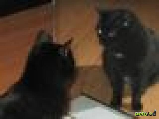 Какими кошки видят нас, своих хозяев?