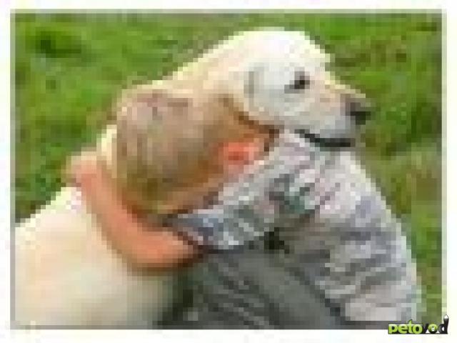 О чём думает собака, когда её обнимают?