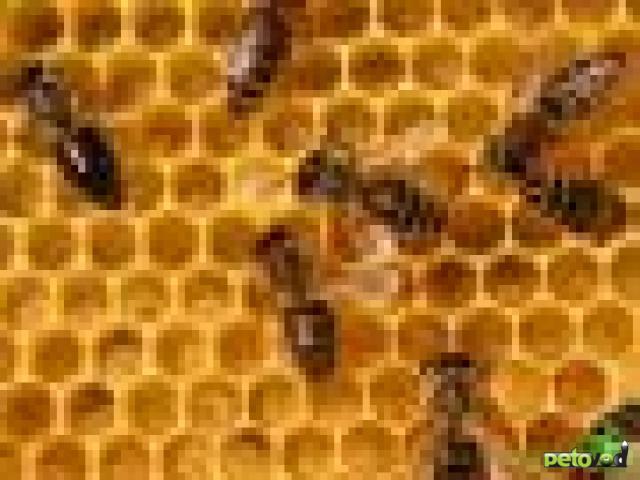 Пчелы - азы ухода за ними