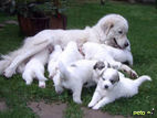 Роды и послеродовой период у собак