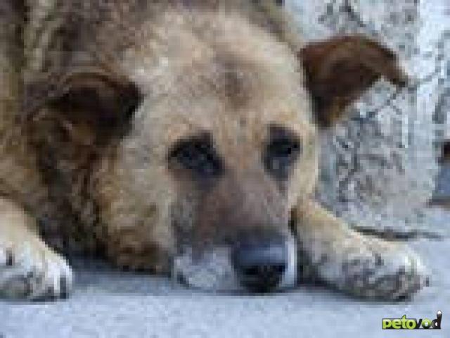 Проблемы пожилых собак