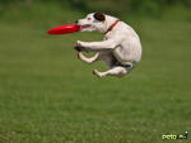 Собака: неизвестное животное