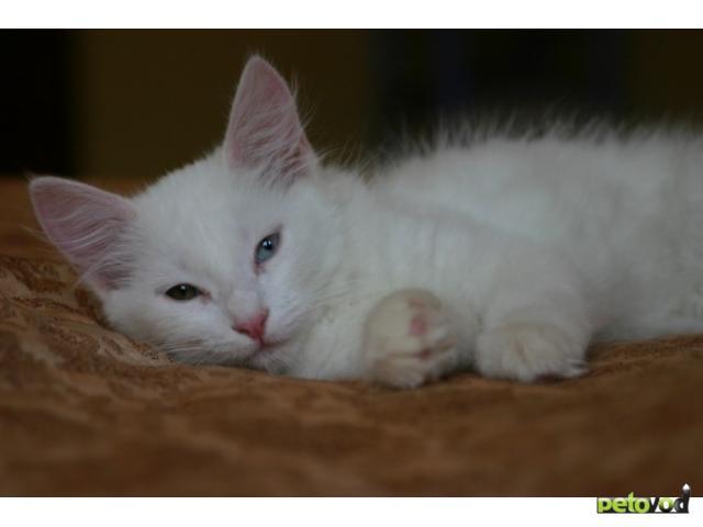 домашней птицы фото беспородного белого котенка костюмы использовали геологи