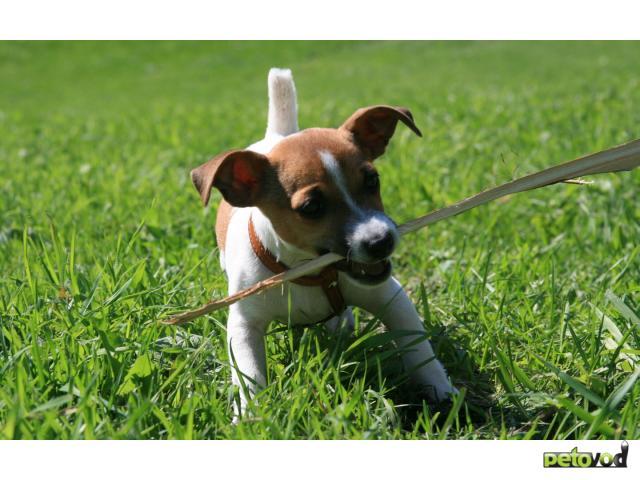 Методы дрессировки собак.