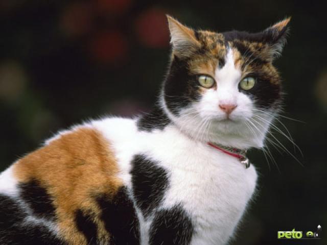 Обзор пород кошек