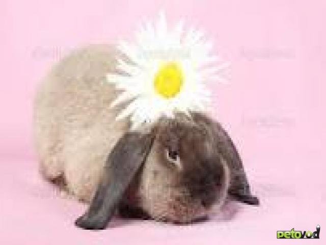 Маленькие плюшевые игрушки - карликовые кролики