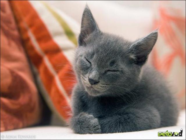 Особенности психологии и поведения кошки