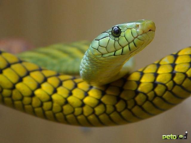 Наиболее частые болезни, встречающиеся у рептилий, их причины и признаки.