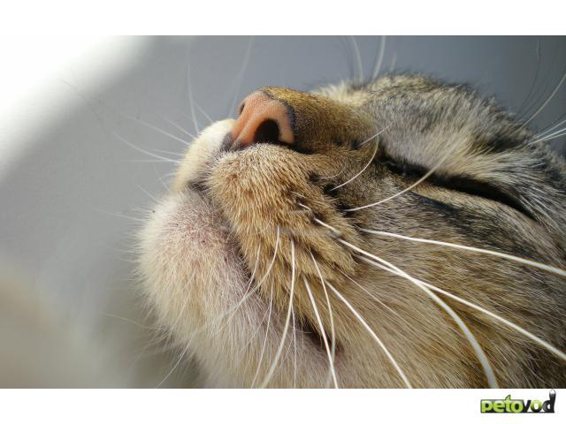 Реакция кота на вибрацию. Правда и мифы о кошачьих усах