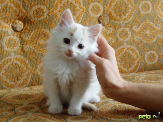вкусными фото беспородного белого котенка кружки фото являются