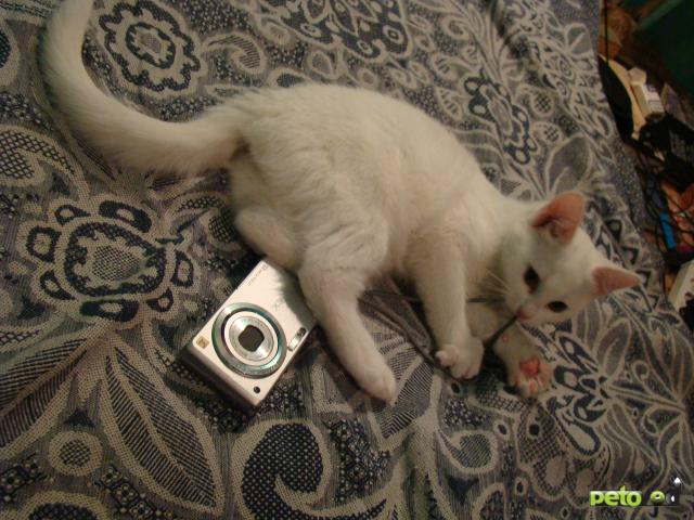 Отдам в дар: Отдадим котят в хорошие руки