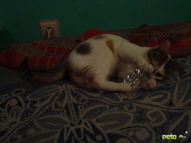 Отдам в дар: Отдадим котят в хорошие руки фото3