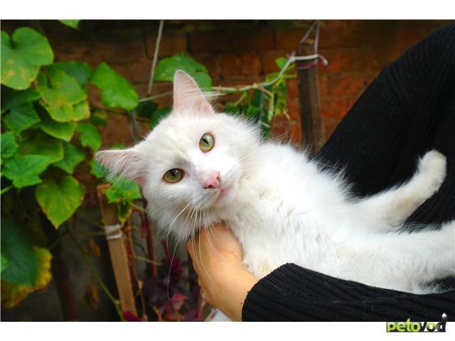 Отдам в дар: Кошечки и котики в поисках дома фото3