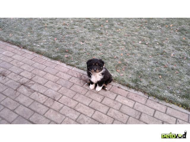 Отдам в дар: Отдаю в дар щенка