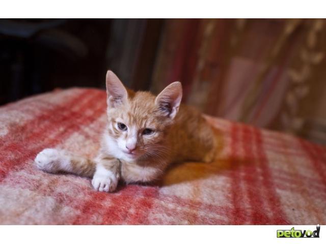 Отдам в дар: отдаю рыжего котенка