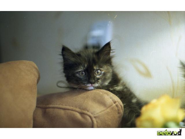 Отдам в дар: Отдам котенка в заботливые руки