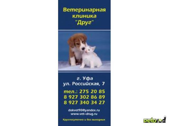"""Продаю: Ветеринарная клиника """"Друг"""""""