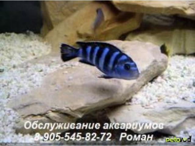Продаю: Чистка аквариумов, обслуживание