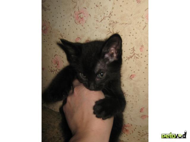 Продаю: Котята в добрые руки фото3