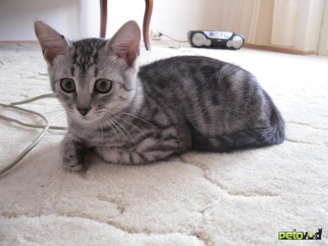 Отдам в дар: котенок Вискас в дар