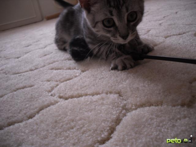 Отдам в дар: котенок Вискас в дар фото2