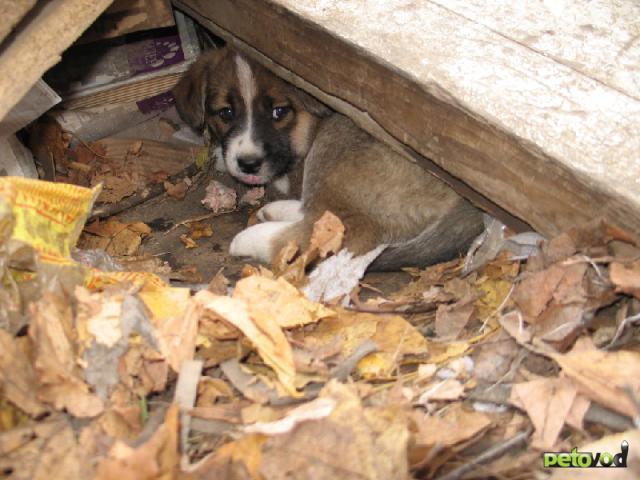 Отдам в дар: Возьмите щенка с улицы и спасите его от холода фото2