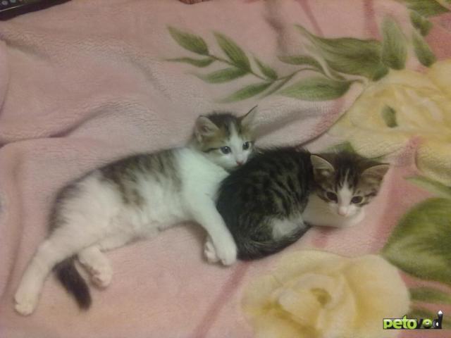 Отдам в дар: Отдадим в добрые руки замечательных котят