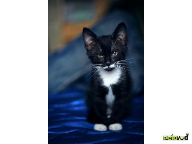 Отдам в дар: Отдам милого котенка