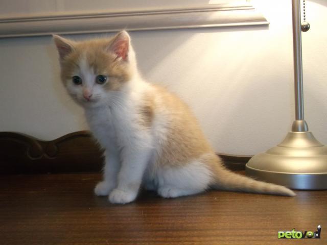 Отдам в дар: Отдам котенка доброму хозяину
