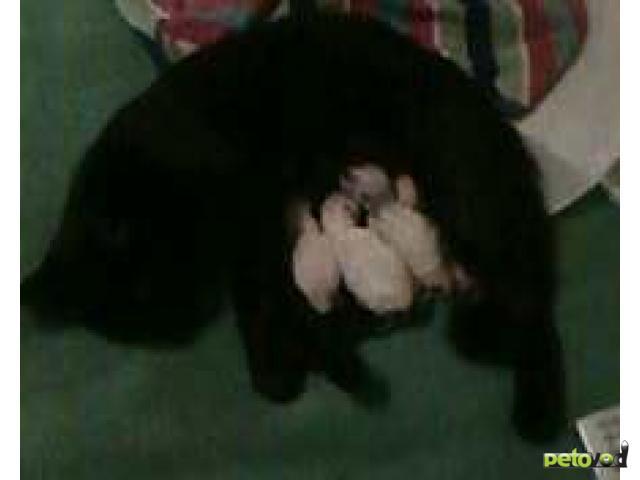 Отдам в дар: отдам в хорошие руки котят фото2