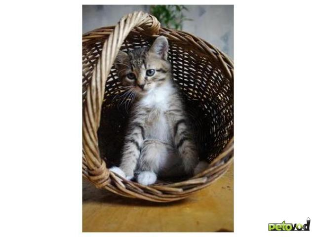 Отдам в дар: котенок Василиса