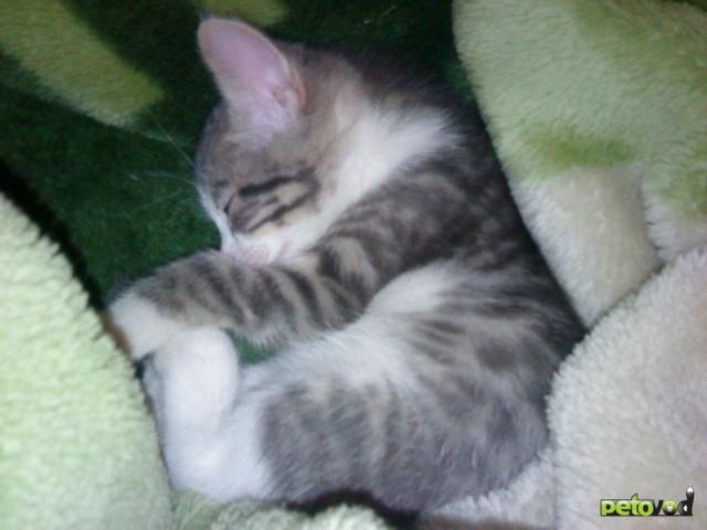 Отдам в дар: Срочно отдам котенка в самые добрые руки