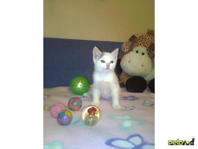 Отдам в дар: котик-обормотик блондин в дар