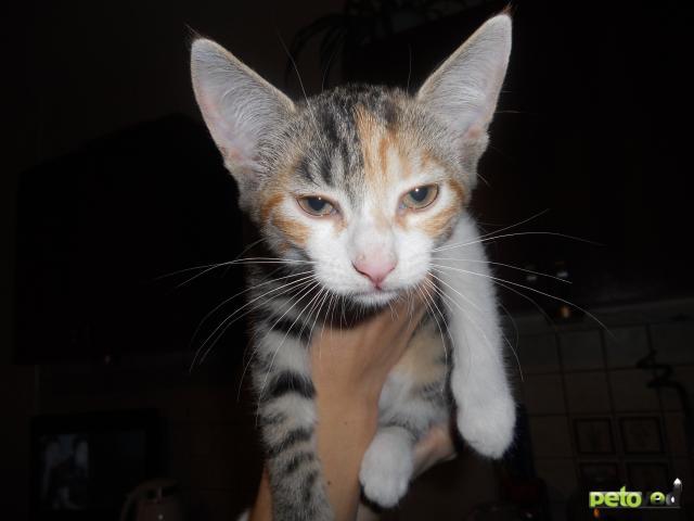 Отдам в дар: Котенок-кошечка в добрые руки
