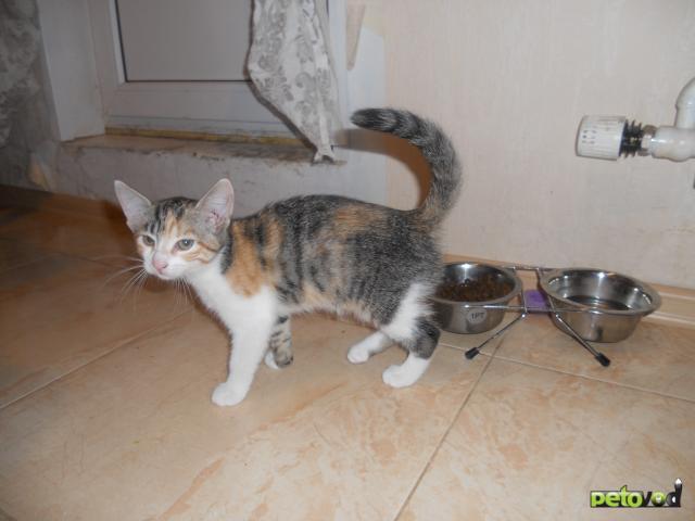 Отдам в дар: Котенок-кошечка в добрые руки фото2