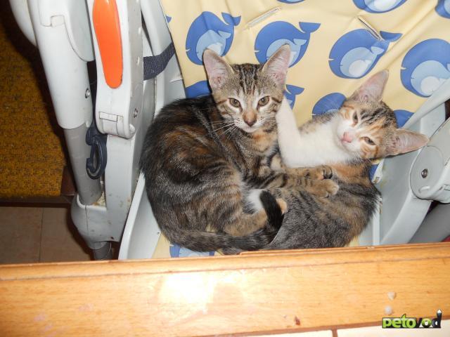 Отдам в дар: Котенок-кошечка в добрые руки фото3